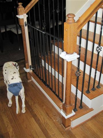 finally finished installing the gate for the bottom of the stairs.